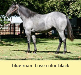 The Roan Age