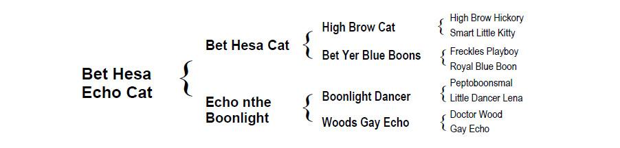 2017 Red Roan Colt - Bet Hesa Echo Cat